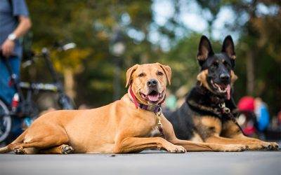 The Importance of Noticing Positive Behavior when Training Your Dog